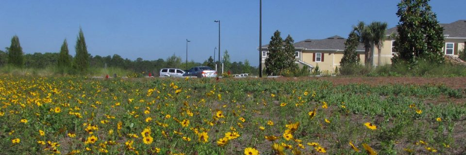 Native wildflowers and grasses. A natural solution for creating sustainable roadsides and landscapes.